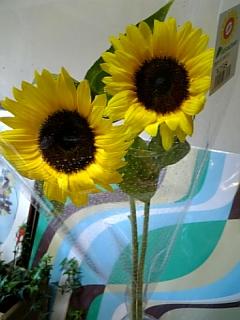 花の日礼拝♪